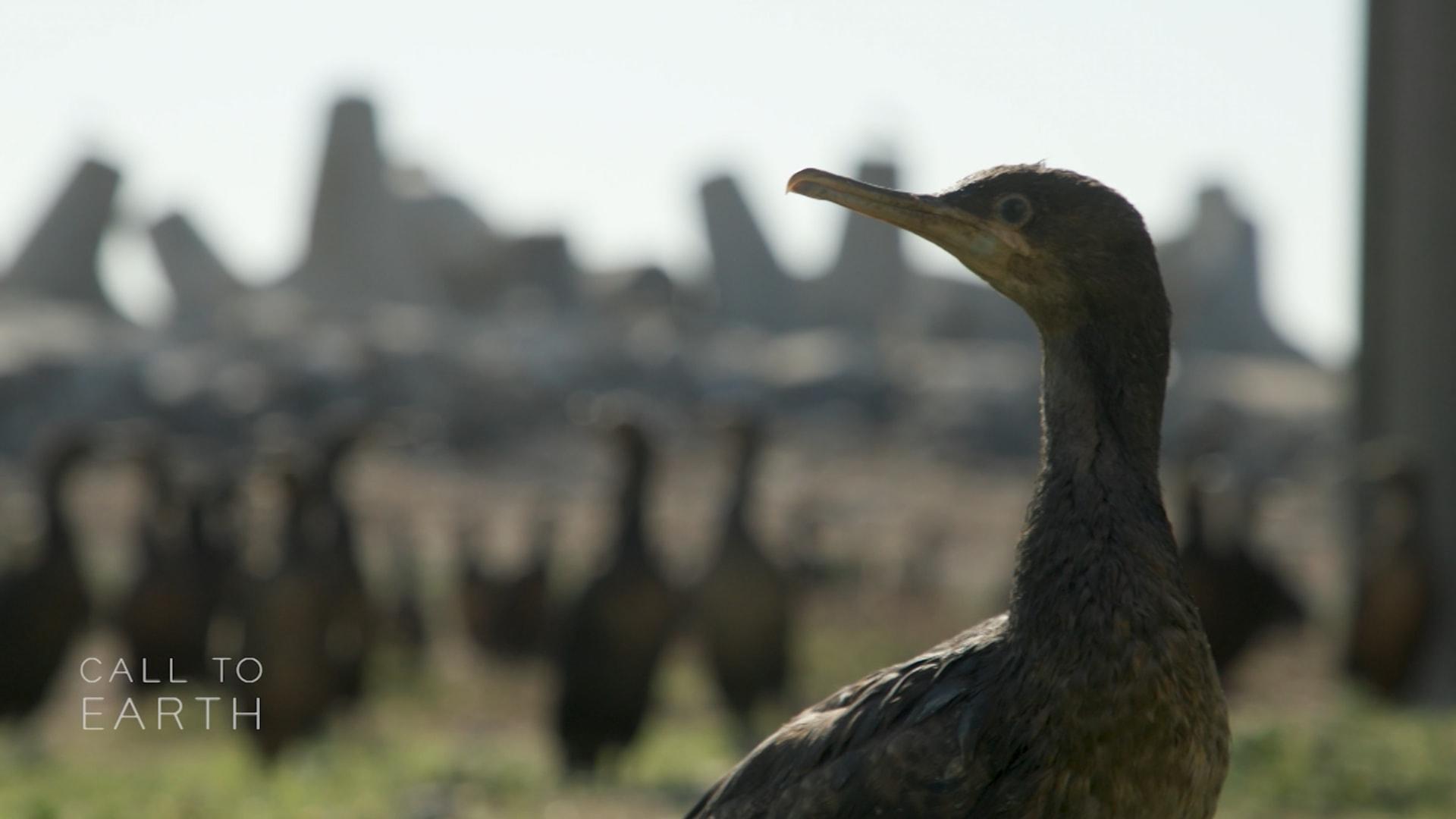 مهمة إنقاذ 2000 من فراخ طيور غاقة رأس الرجاء الصالح في جنوب أفريقيا