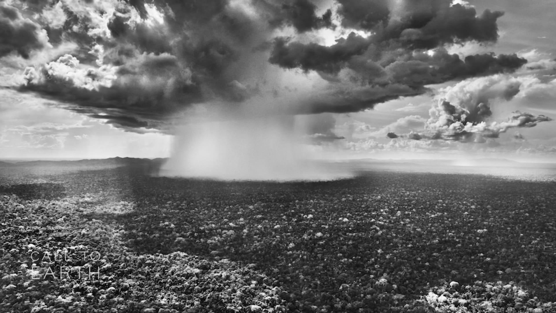 """بصور ملحمية.. مصوّر يوثق الجانب """"الحي"""" من غابة الأمازون"""