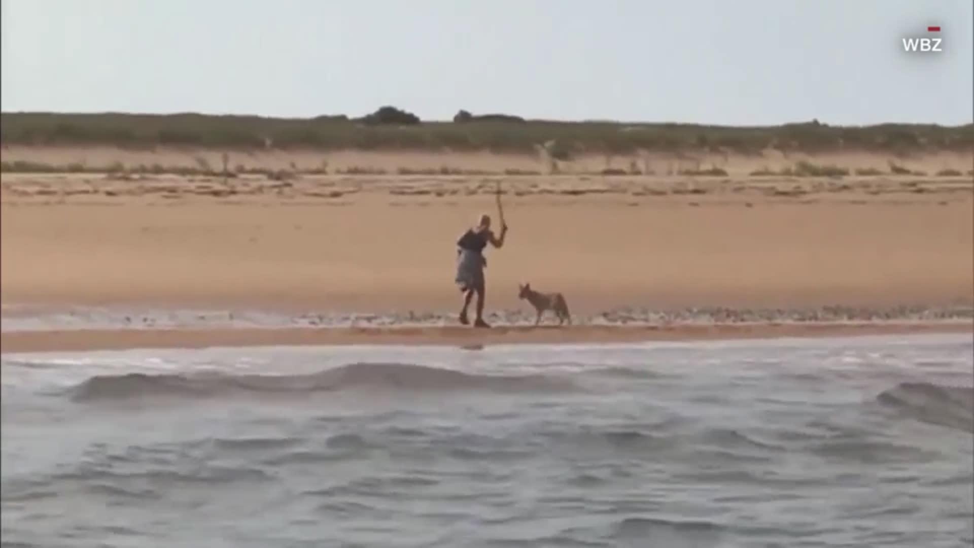 """""""لأنها لم تطعمه"""".. ذئب يطارد امرأة على شاطئ بحر"""
