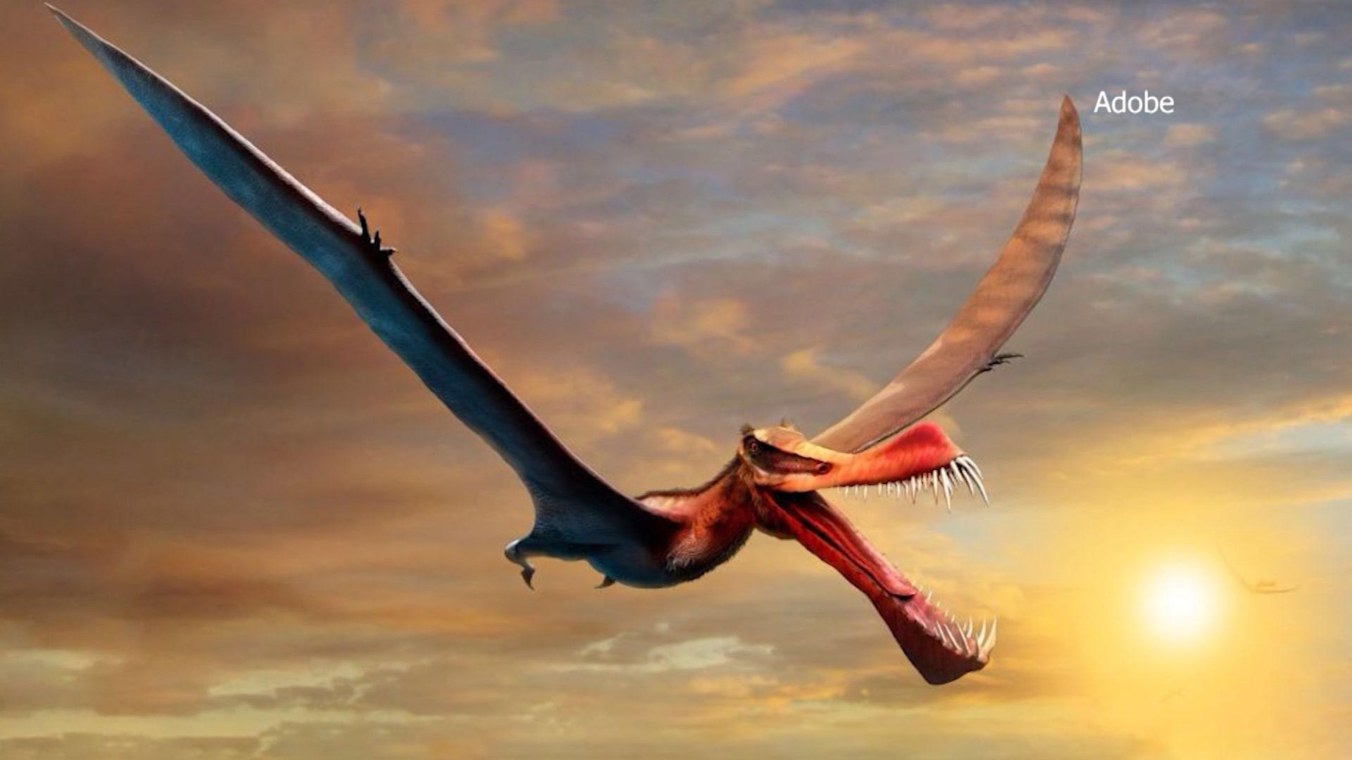 """""""أقرب شيء لدينا إلى تنين حقيقي"""".. باحثون في أستراليا يكتشفون جمجمة نوع جديد من الديناصورات المجنحة"""