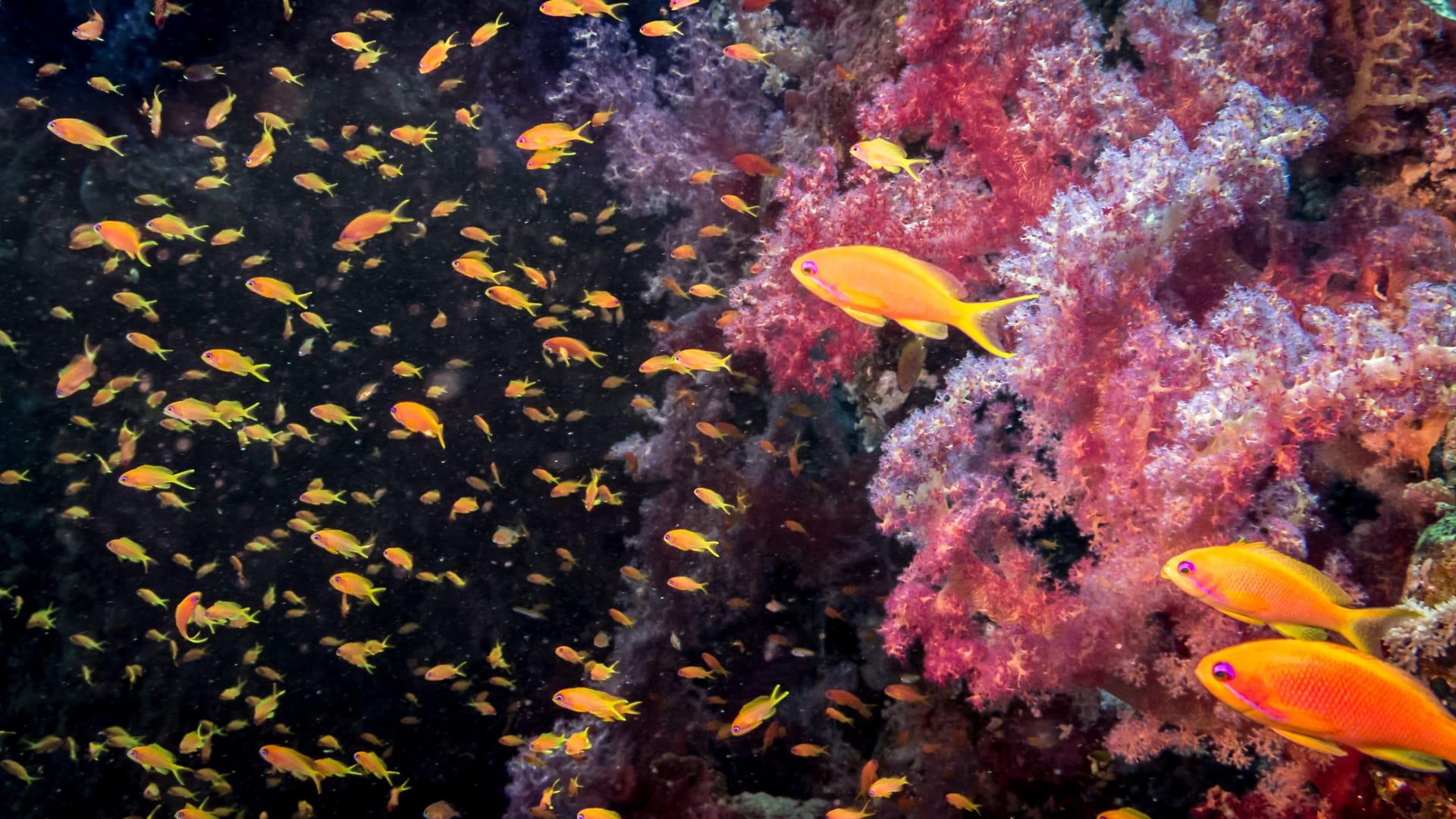 قبلة الغواصين في العالم..اكتشف عجائب الطبيعة بمحمية رأس محمد في مصر