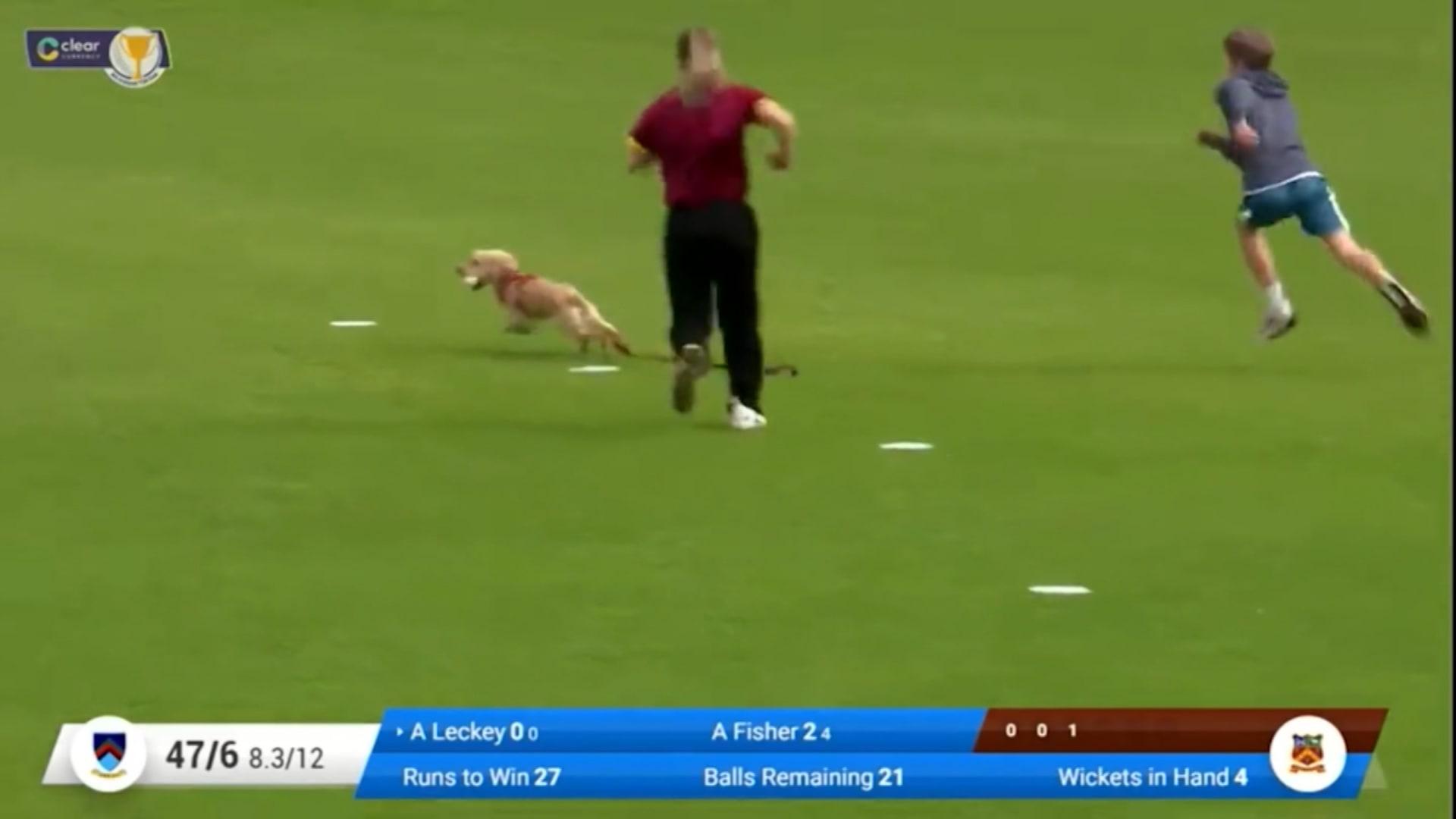 مشهد أثار الضحكات.. كلبة تقتحم الملعب وتخطف الكرة ولاعبات يسارعن بملاحقتها