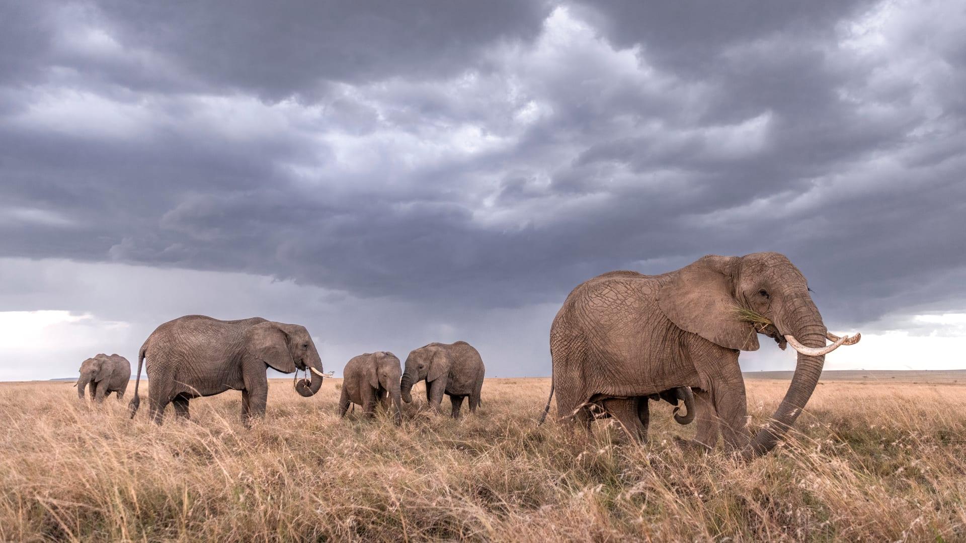 .كيف حصل مصور بريطاني على صور العمر للحياة البرية في كينيا