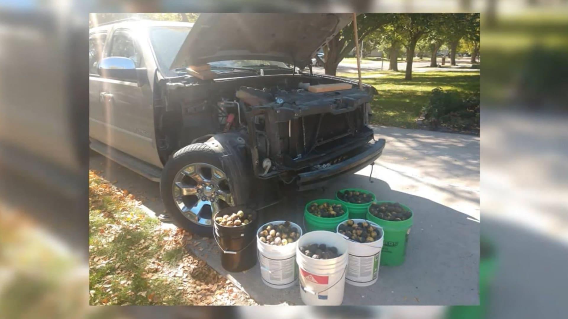 أمريكي يمضي أيامًا في تنظيف سيارته من آلاف ثمار الجوز.. خبأها سنجاب داخلها لمؤنة الشتاء