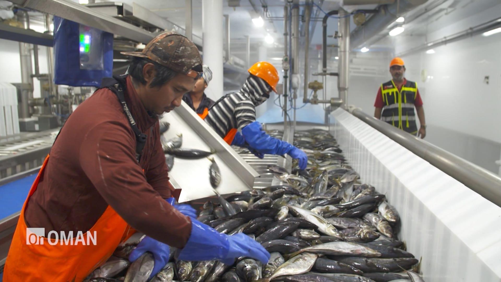 شاهد.. خطط عُمان لغزو أسواق الأسماك العالمية وبطريقة مستدامة