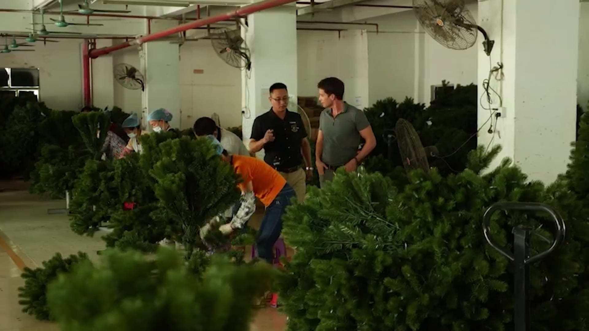 نقص أشجار عيد الميلاد وسط أزمة سلسلة التوريد العالمية