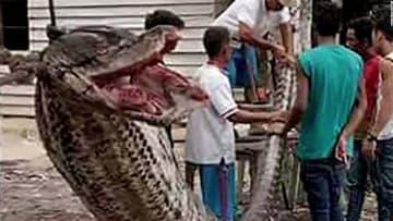 شاهد كيف انتهت مواجهة شرسة بين أندونيسي وثعبان ضخم!