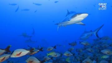 اسبح مع أسماك القرش الهائلة العدد في هذه الجزيرة