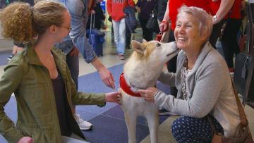 لماذا تتجول عشرات الكلاب في مطار دولي بأمريكا؟