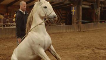 بالفيديو: كيف تستعد الخيول للمشاركة في الأفلام والمسلسلات؟
