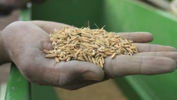"""السودان """"سلة غذاء"""" العرب.. طموح لجذب أموال خليجية تسد فجوة الغذاء"""