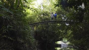 كيف قام هذا الثنائي بإعادة غابة كاملة إلى الحياة؟
