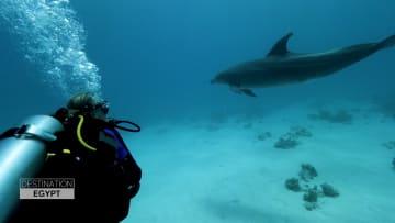 السباحة مع الدلافين في الجونة.. تجربة فريدة من نوعها في مصر