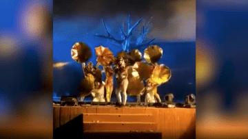لحظة تعرض أعضاء فرقة موسيقية للطعن في السعودية