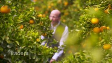 مزرعة برتقال في مصر بحجم بيروت.. تعرف على أكبر المصدّرين