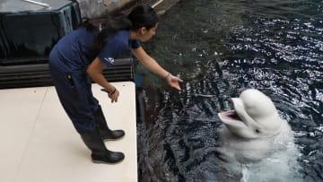 كيف تبقى الحيتان البيضاء نشطة رغم غياب السياح بسبب فيروس كورونا؟