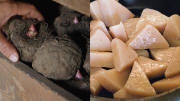 مزارع ياباني يشغّل الموسيقى لبطاطا كونياكو الخاصة به.. لماذا؟