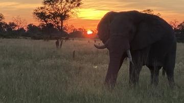 كيف أثر فيروس كورونا على صناعة السفاري في أفريقيا .. وماذا سيحدث للحيوانات البرية؟