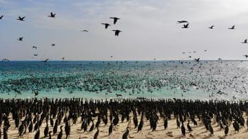 منها غزو طيور الغاق السقطري.. إماراتي يبرز تنوع الحياة البحرية بأبوظبي