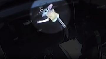 ما السر وراء وجود هذه الدمية الغريبة في الفضاء؟