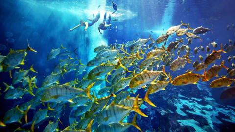يضم آلاف الكائنات البحرية..نظرة وراء الكواليس داخل أكبر حوض مائي في دبي