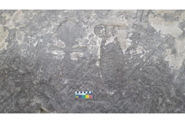 كيف كانت تُنقل الأحجار قديماً عبر نهل النيل لبناء معابد مصر؟