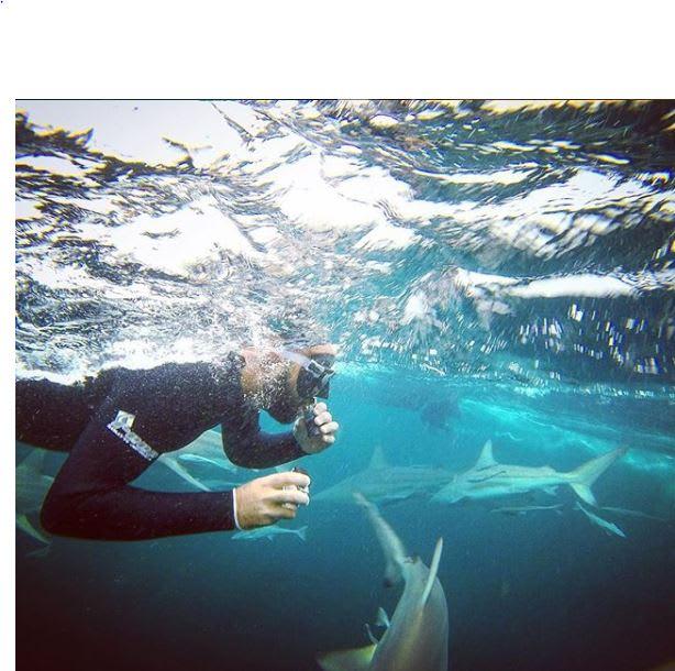 """غواص مصري يقتحم """"ملعب"""" سمك القرش الأبيض لهدف.. فما هو؟"""