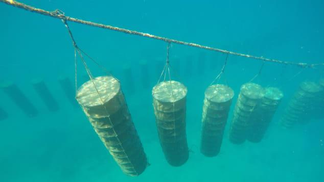 ما هي الثروة الجديدة التي تنبثق من أبحر دولة الإمارات؟