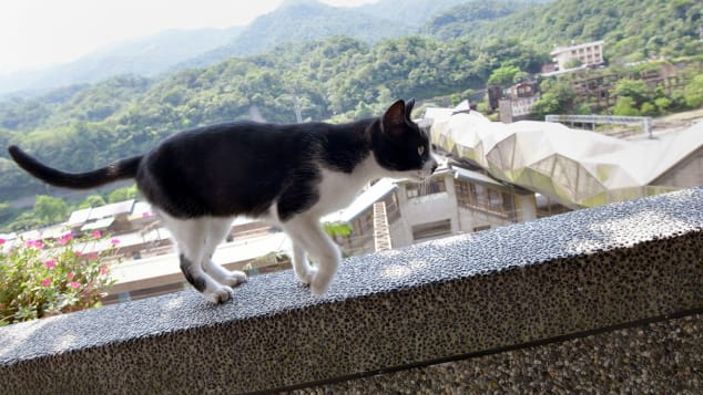 كيف أنقذت قطط قرية بأكملها في تايوان؟