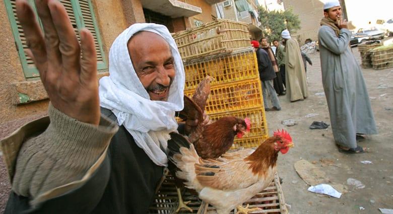 وفاة سيدة بصعيد مصر تجدد المخاوف من أنفلونزا الطيور