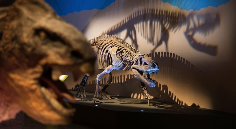 هل هامت الديناصورات فوق أرض السعودية؟