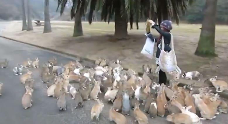 الجزيرة التي يفرّ فيها البشر من الأرانب