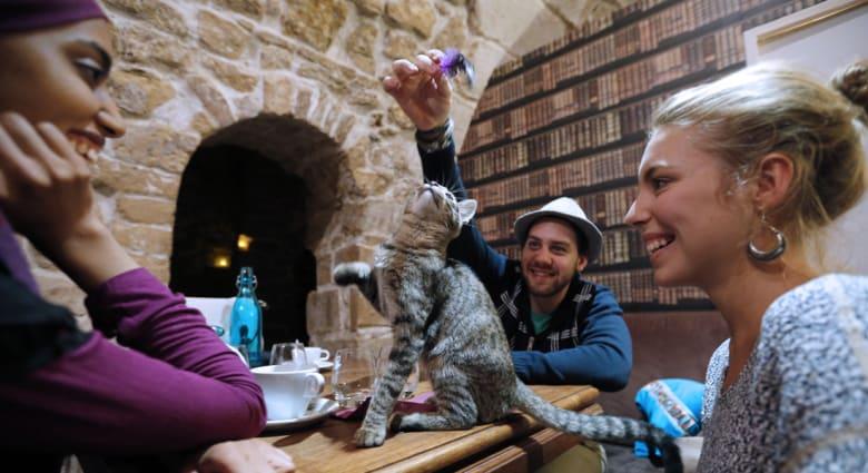 Cat Cafe أول مقهى لتبادل أطراف المواء وبحث شؤون القطط