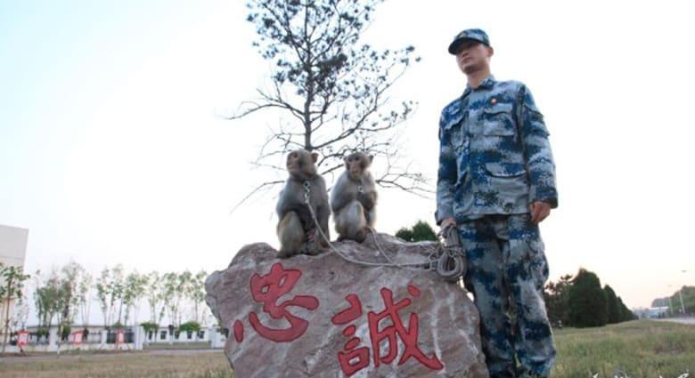 """قردة مدربة لــ""""حماية"""" سلاح الطيران في الصين"""
