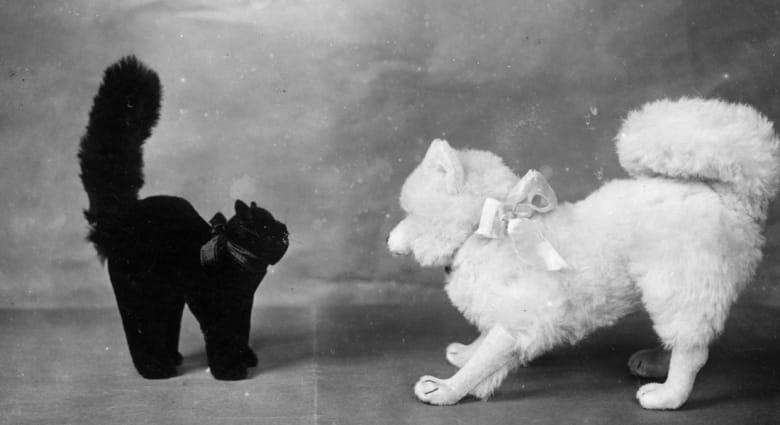 الكلاب أم القطط..أيهما تفضل أكثر؟