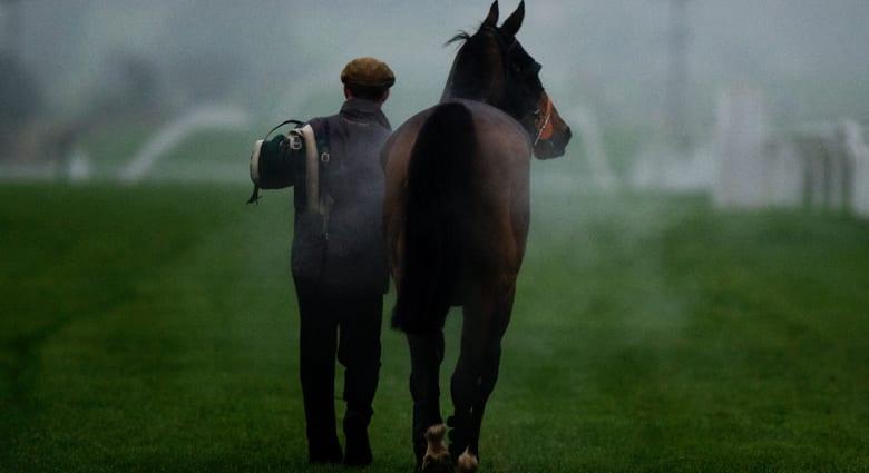 هل تريد امتلاك حصان؟ كم تبلغ الكلفة برأيك؟