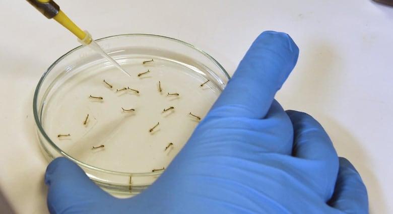 بكتيريا مقاومة للمضادات تثير الذعر بكاليفورنيا.. وفاتان من بين 179 مصاباً ومخاوف من الفتك بنصفهم