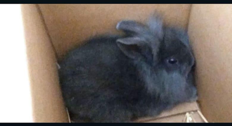 """إذاعة دنماركية تقتل أرنباً على الهواء لتثبت """"نفاق"""" محبي الحيوانات"""