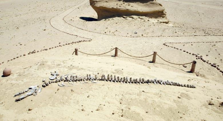 الكشف عن أكبر حوت سار على وجه الأرض.. عاش في مصر قبل 40 مليون سنة