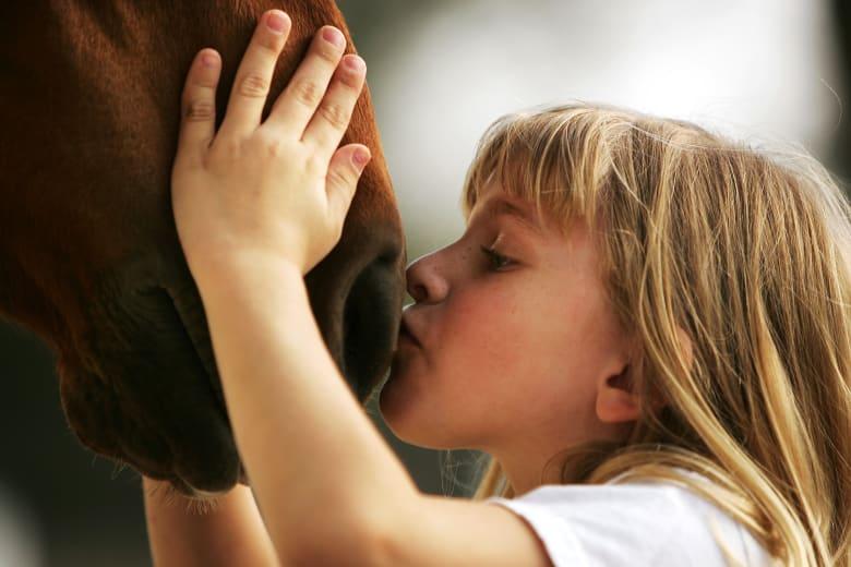 ثلاث طرق لمساعدة حصانك بالاستمتاع بحياة طويلة وصحية