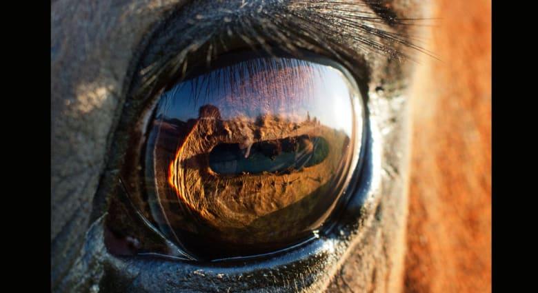 5 حقائق غريبة قد لا تعرفها عن الخيول