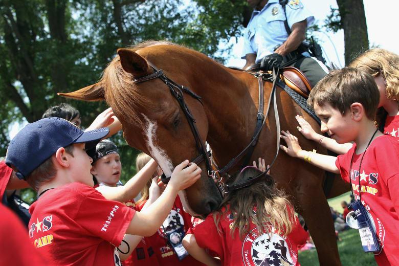 سبب جديد لعشق الخيول... قادرة على الشعور بسعادتك أو حزنك!
