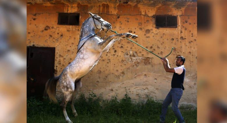 هل تعاني من عدم استجابة حصانك؟ هذه التصرفات الخاطئة قد تكون السبب