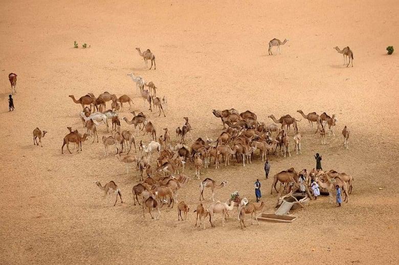 بعدما اكتشفه شاب قبل أيام.. حمى التنقيب عن الذهب تجتاح موريتانيا