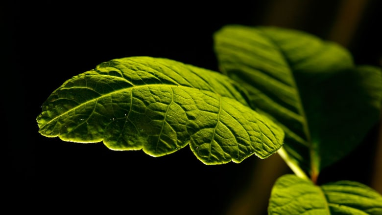6 نباتات فعالة لمحاربة الاكتئاب