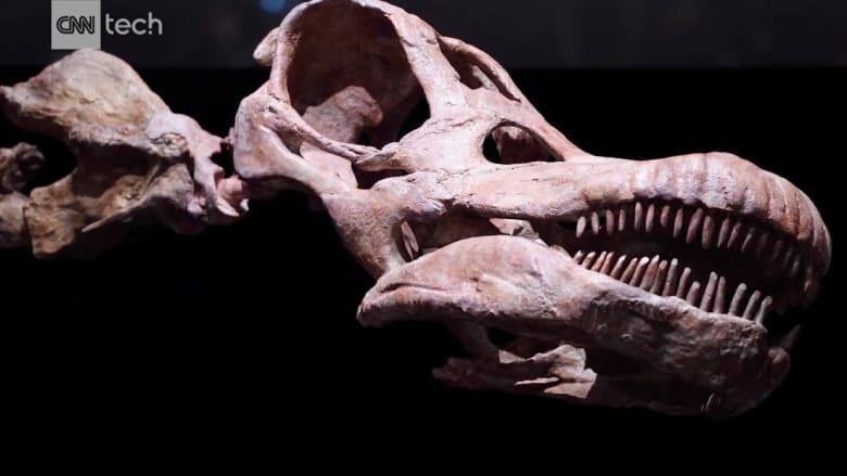 وزنه يعادل طائرة بوينغ 737.. تعرف على أكبر ديناصور في العالم