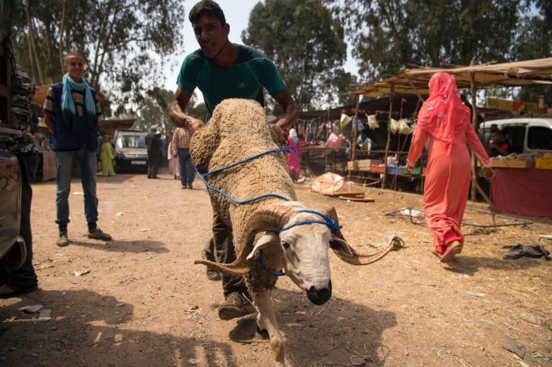عيد الأضحى بالمغرب.. لا شيء يضيع من الأضحية!