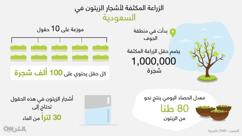تعرّف بالأرقام إلى زراعة الزيتون المكثف في السعودية
