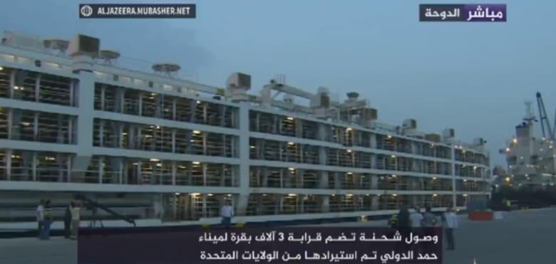 """شاهد.. وصول 3 آلاف بقرة من أمريكا إلى قطر لمواجهة تداعيات """"مقاطعة"""" الدول الأربع"""