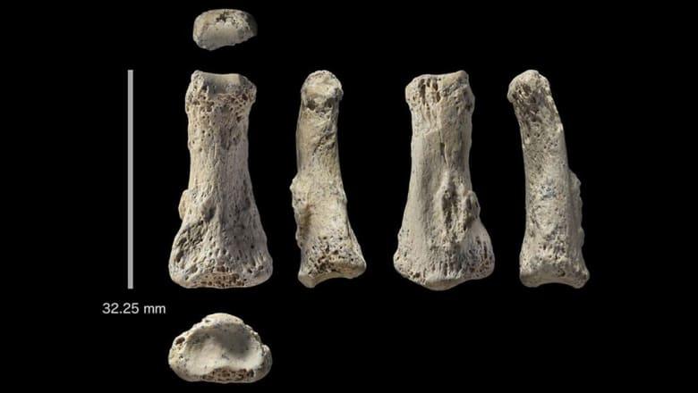 أحفورة عمرها 85 ألف سنة في السعودية قد تعيد تعريف نظرية الهجرة الحديثة